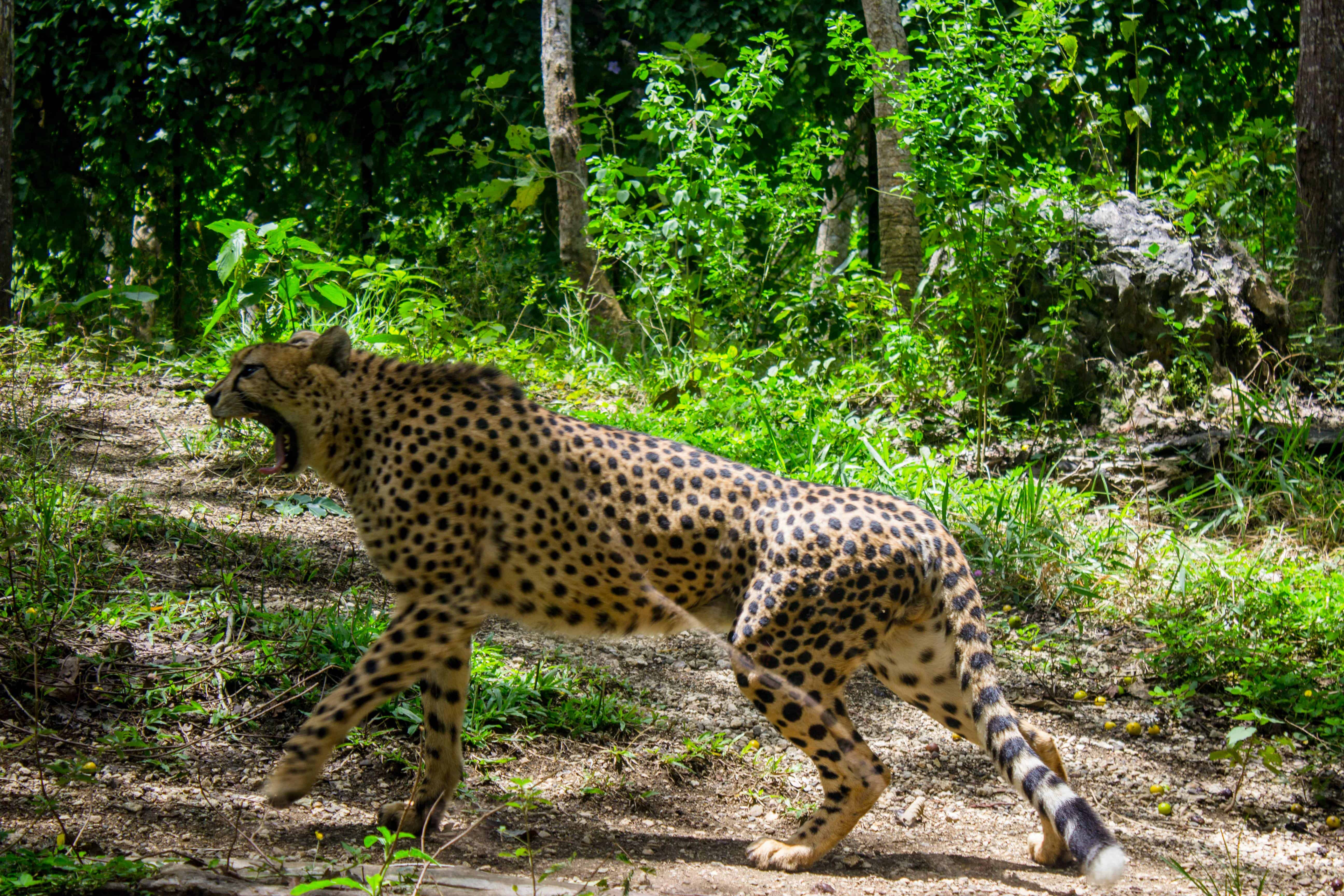 cebu safari (4)