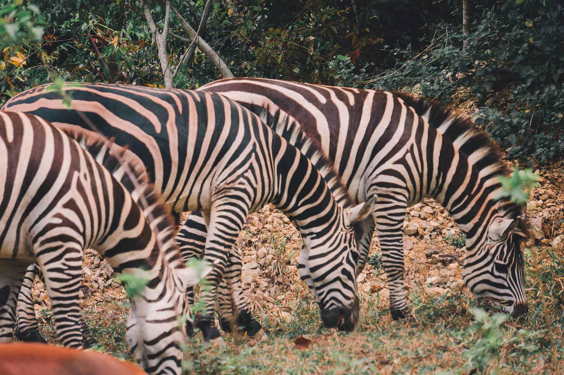 Cebu Safari Animals (3)