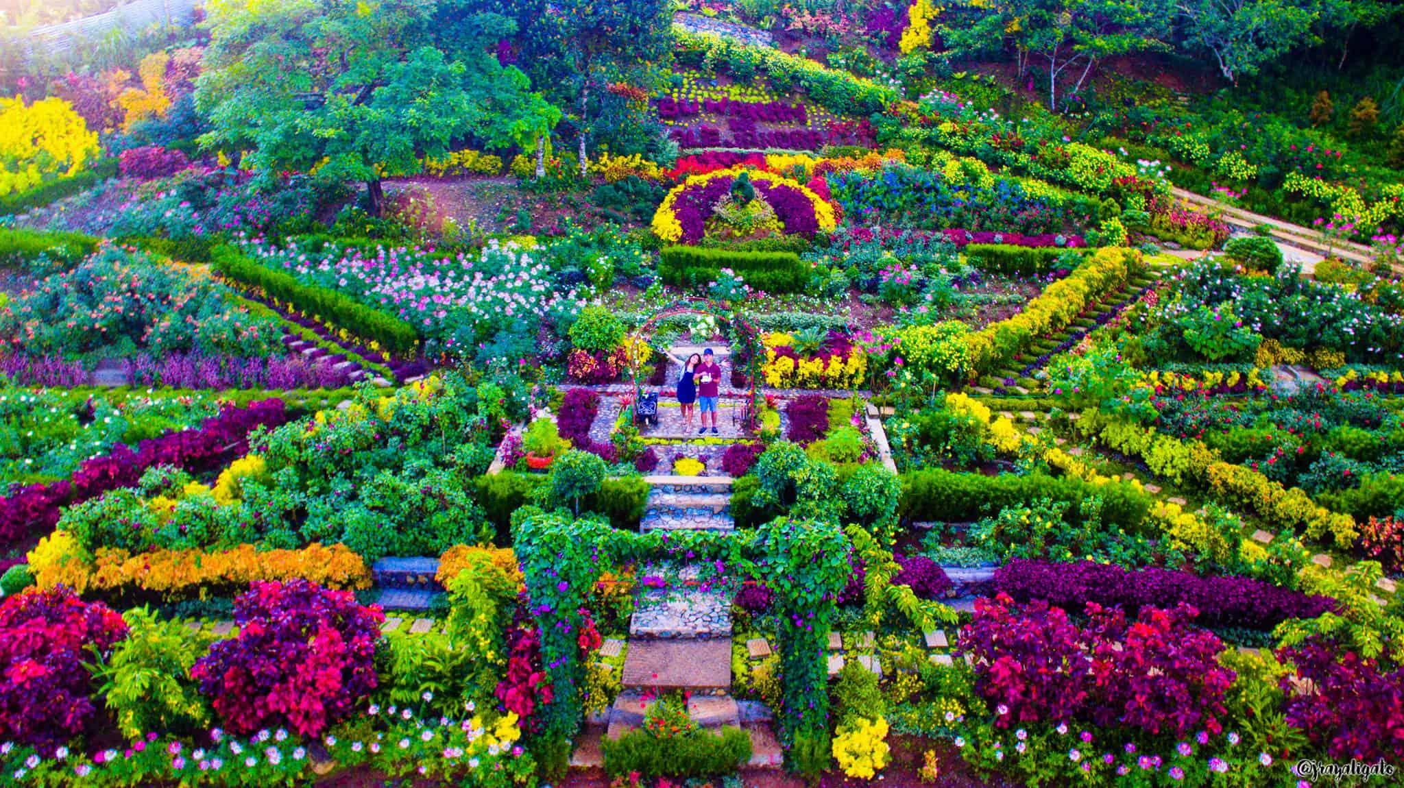 Buwakan Ni Alejandra Balamban 39 S Gorgeous Flower Garden Experience Cebu