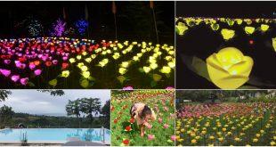 gardenofhelen-500roses-argao