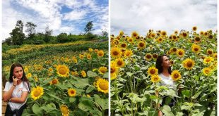 2 sunflower farm dalaguete cebu
