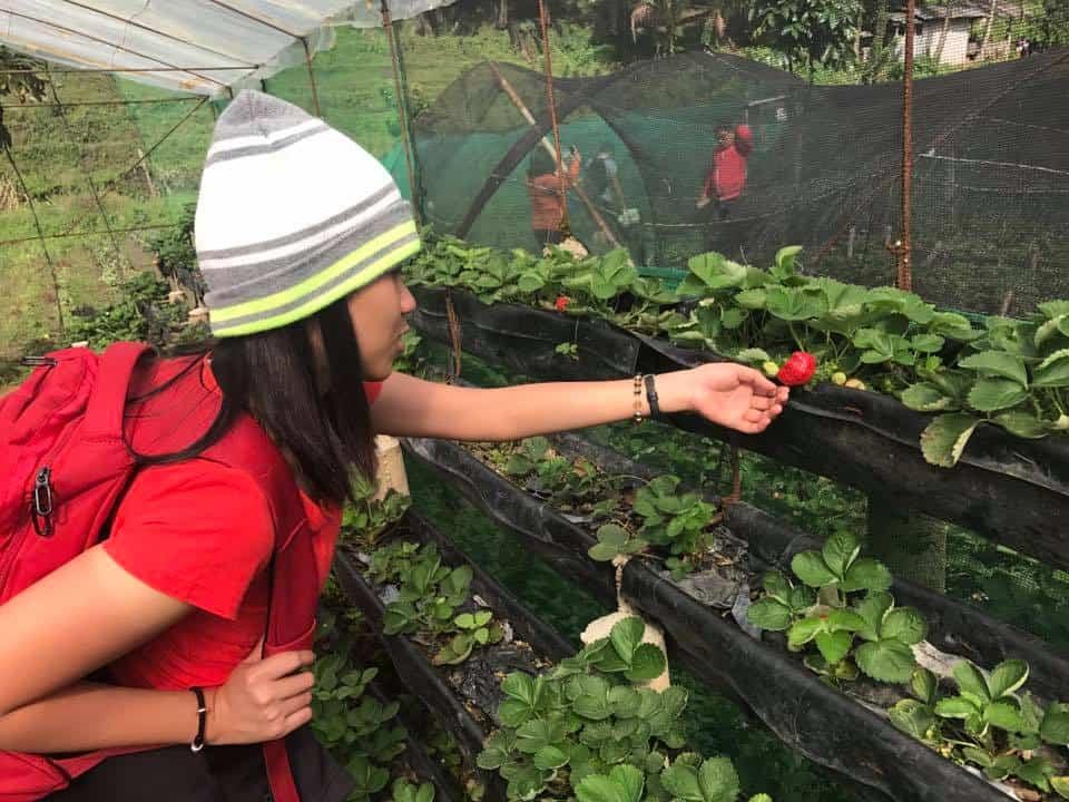 4 strawberry farm