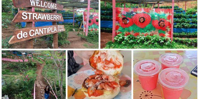 strawberryfarmdecantiplacebucity