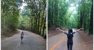 1manmadeforest-cebu