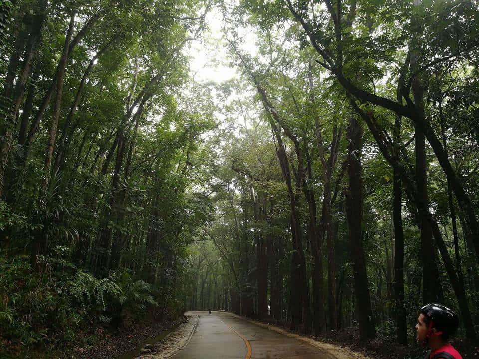 Campo 7 Man-Made Forest Cebu Minglanilla