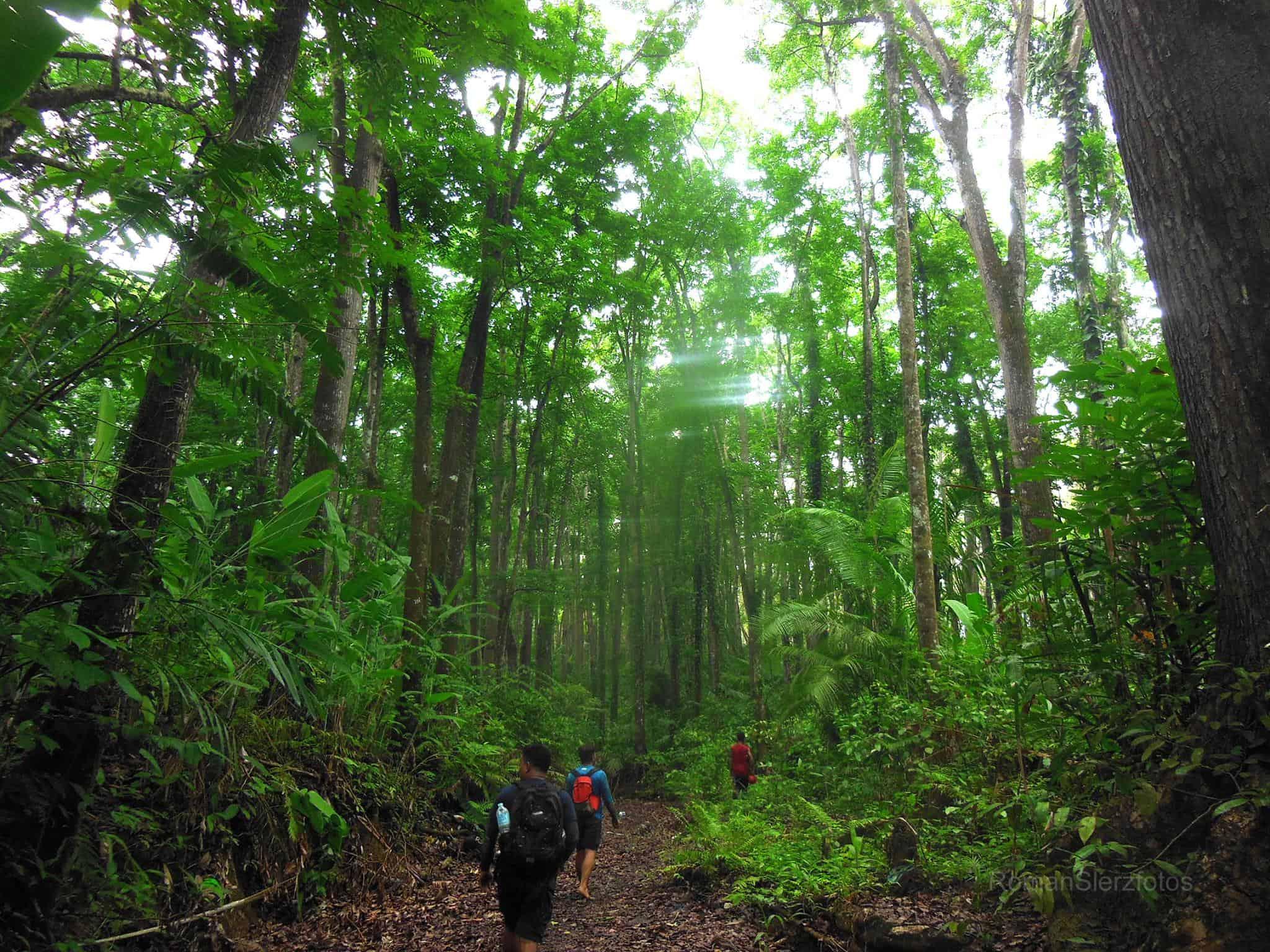 Cebu Manmade Forest (3)
