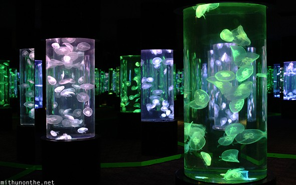 cebu-ocean-park-jellyfish