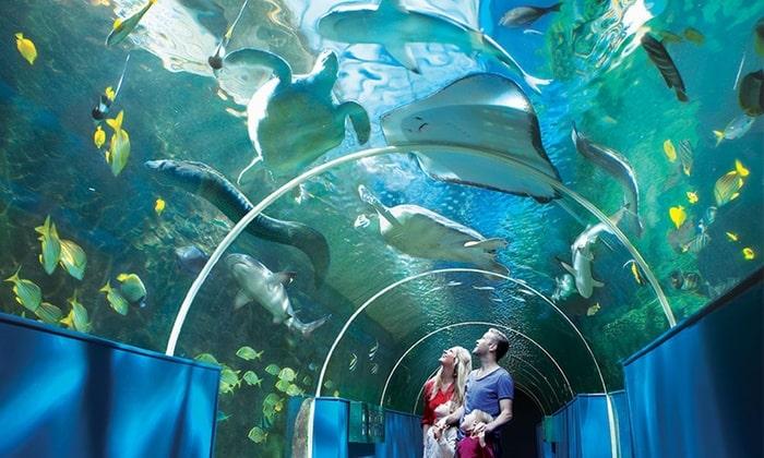 cebu-ocean-park-oceanarium1