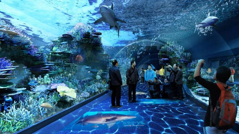 What To Expect At The Cebu Ocean Park Sugbo Ph Cebu