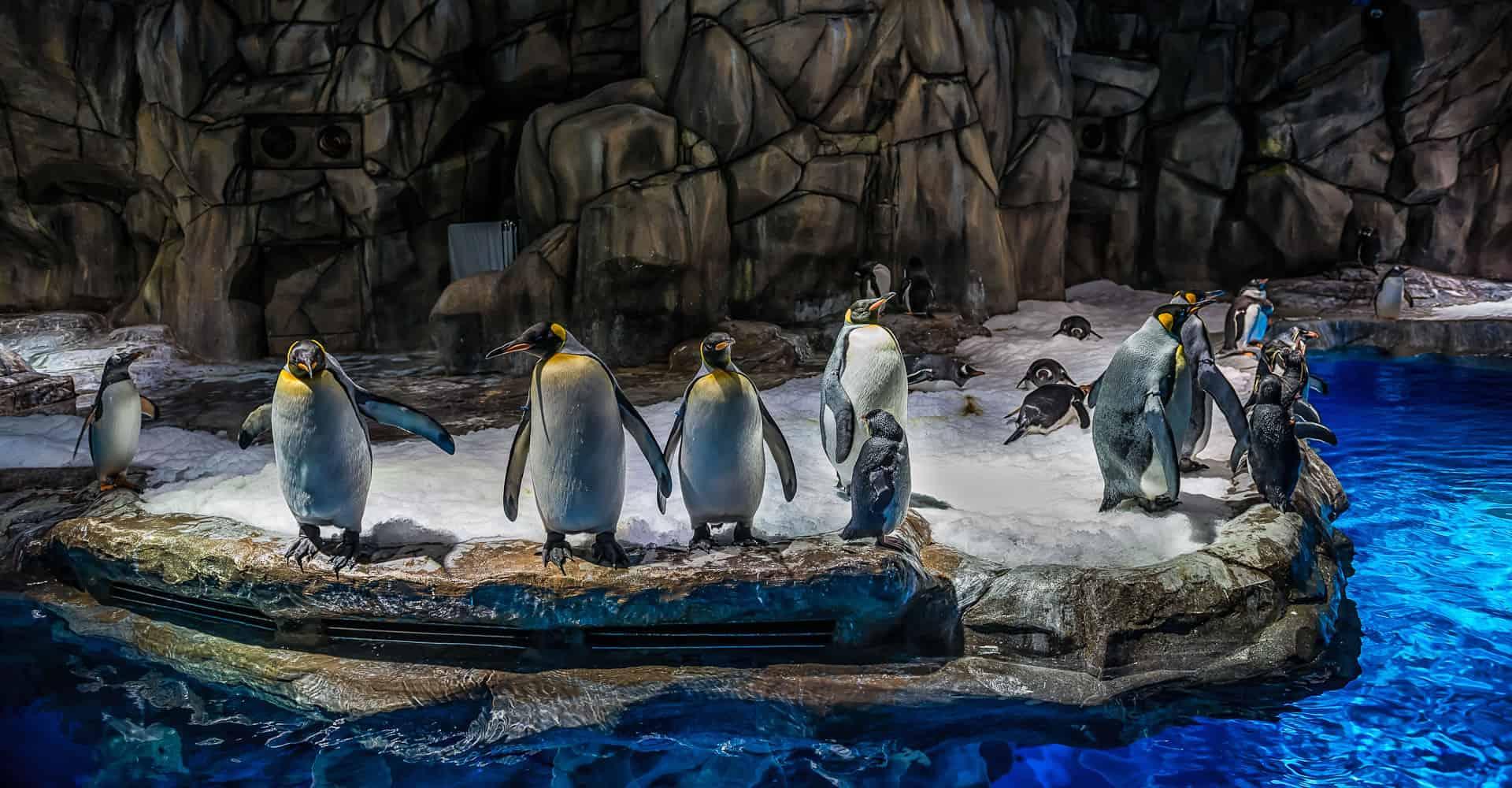 cebu-ocean-park-penguinshow