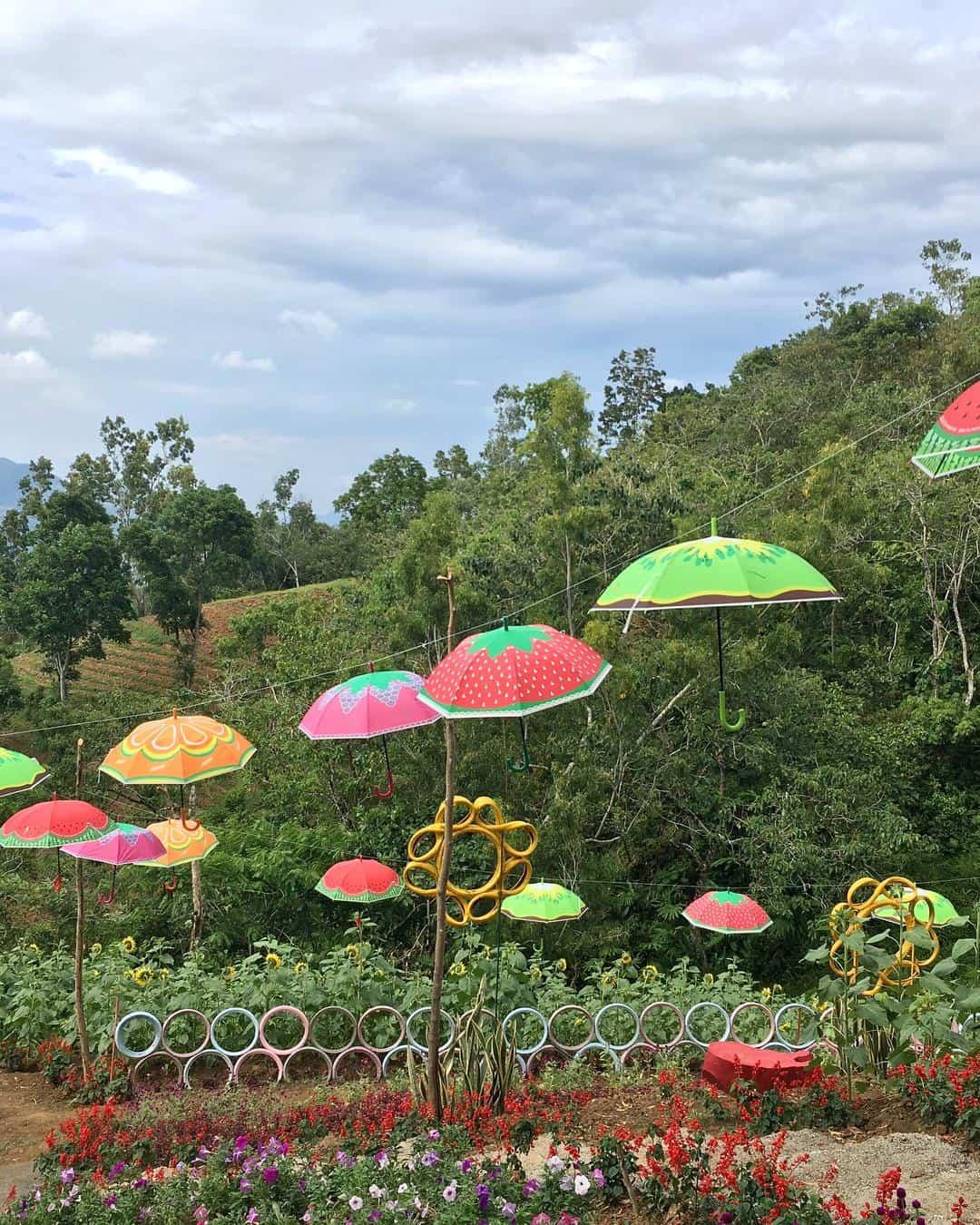 Katilong Sunflower Farm Cantipla Cebu City (5)