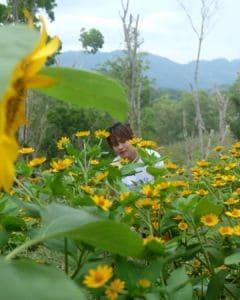 Katilong Sunflower Farm Cantipla Cebu City (7)
