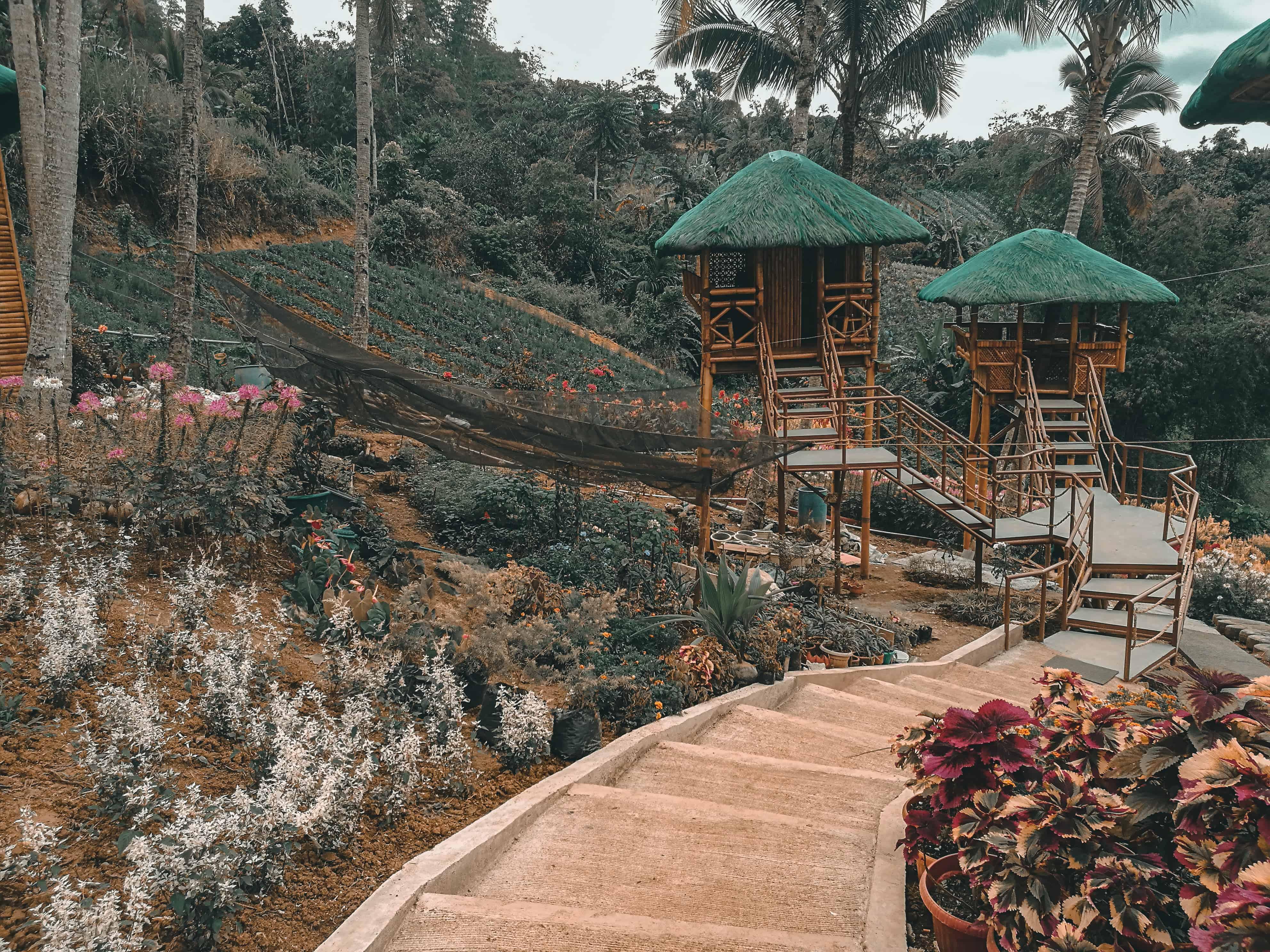 MSDEA Ornamental Garden Cebu City (12)