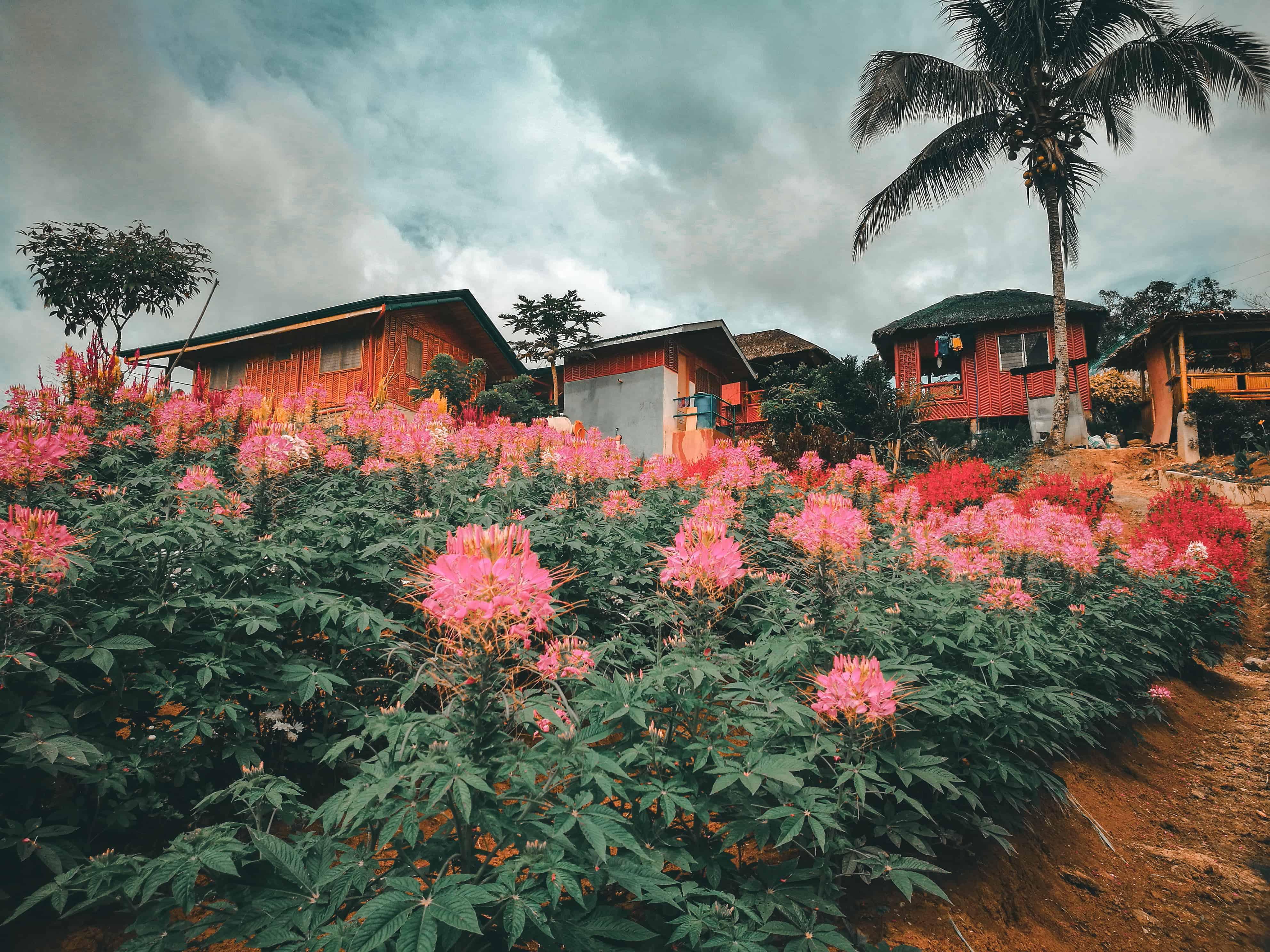 MSDEA Ornamental Garden Cebu City (4)