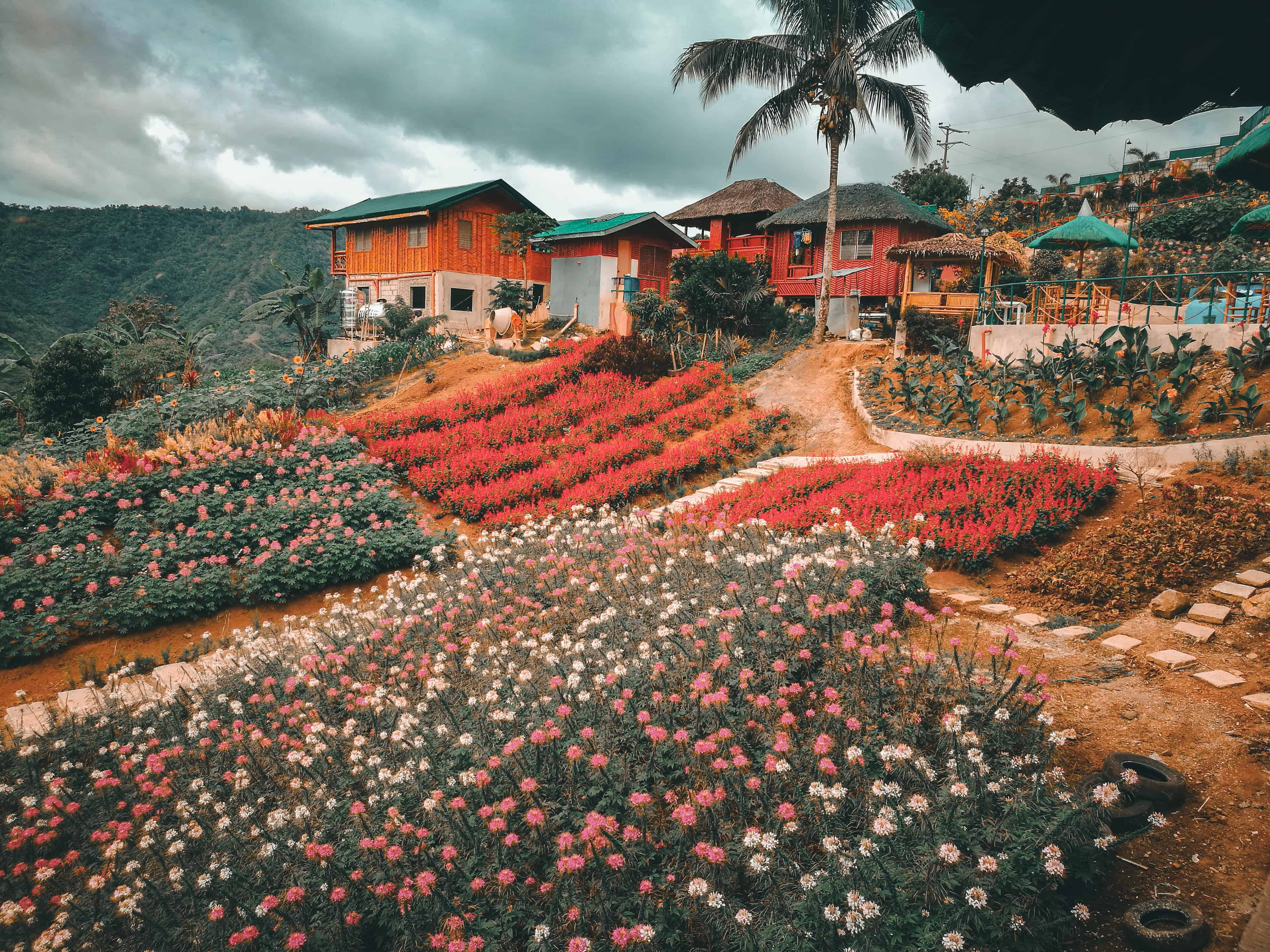 MSDEA Ornamental Garden Cebu City (7)