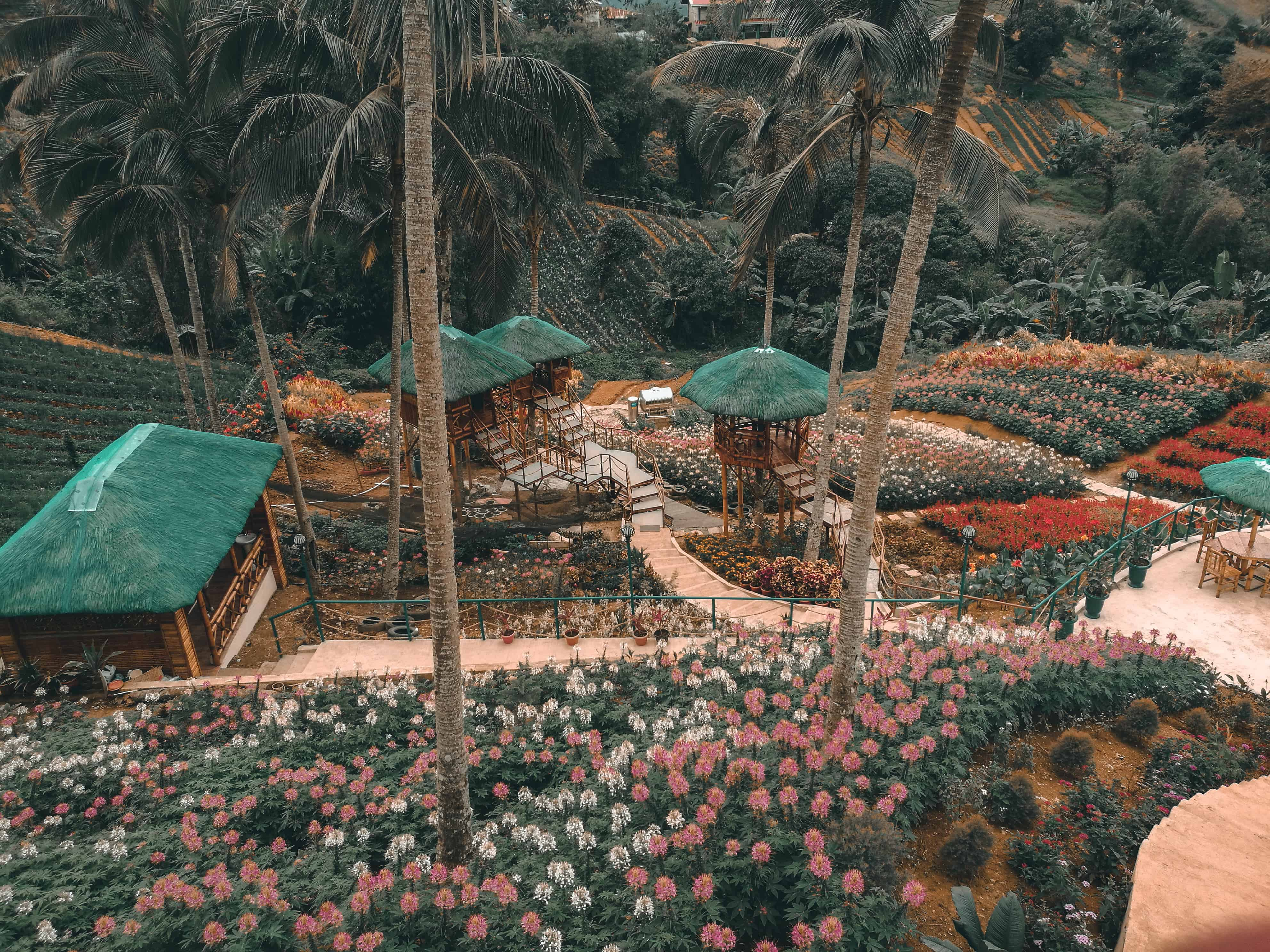 MSDEA Ornamental Garden Cebu City (9)