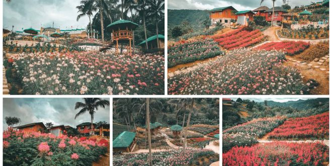 MSDEA Ornamental Garden Cebu City Sugbo