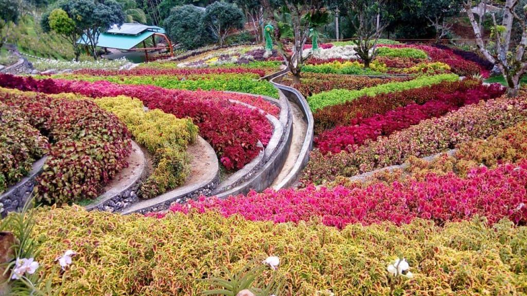 cebu safari flower garden (1)