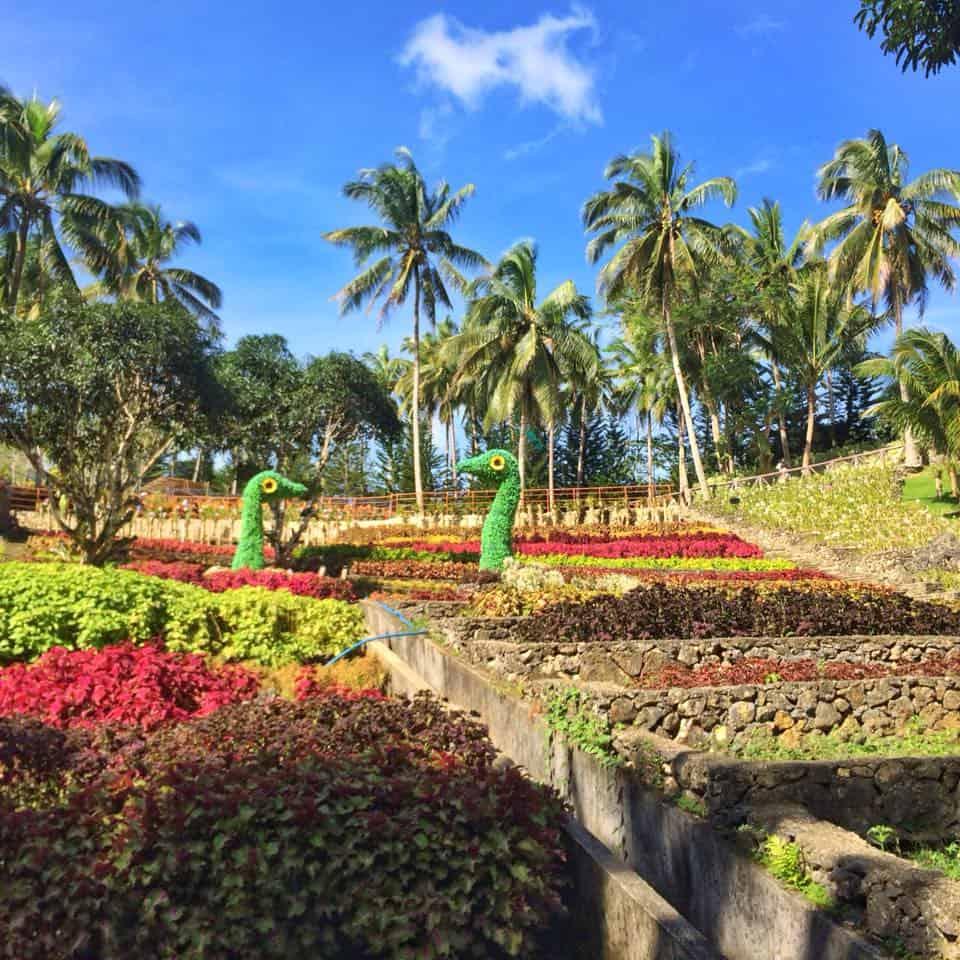 cebu safari flower garden (2)