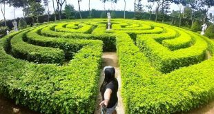 labyrinth-maze-cebu