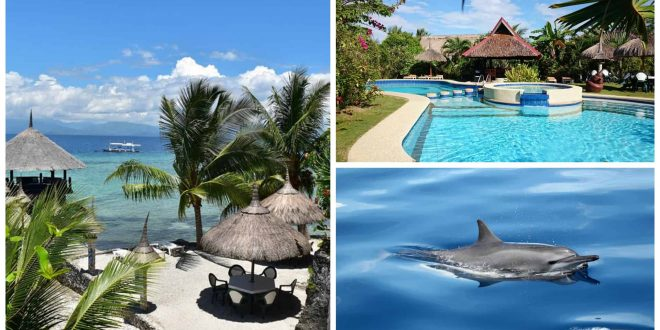 Dolphin House Resort Moalboal Cebu