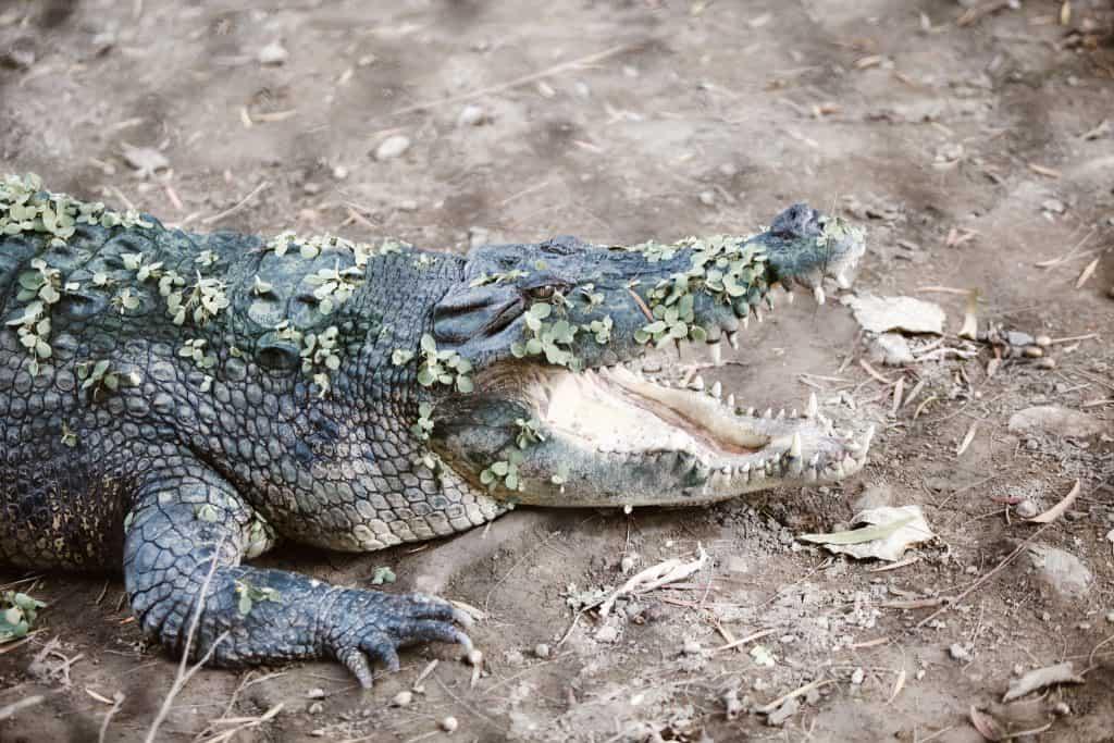Crocolandia Talisay Cebu (17)