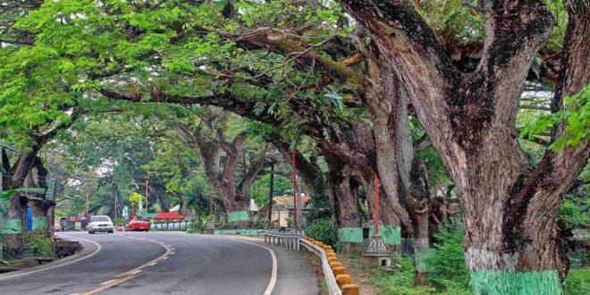 carcar acacia trees cebu