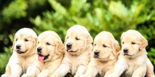 dog hotels in cebu