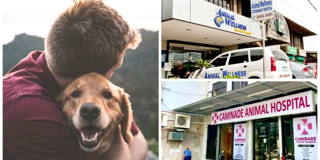 1Veterinary Clinics in Metro Cebu