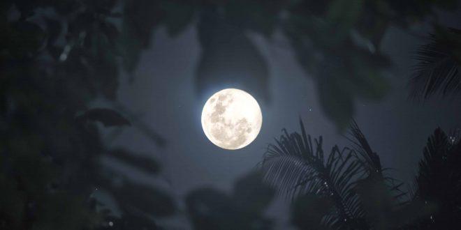 Wolf Moon Eclipse Cebu (1)