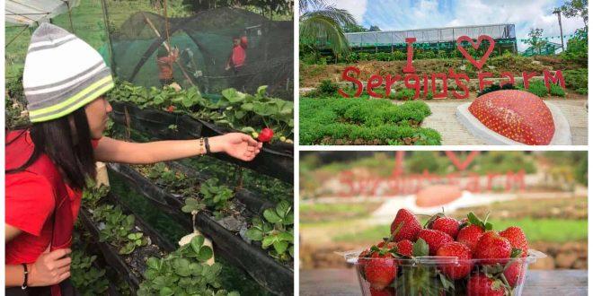 1sergio strawberry farm dalaguete