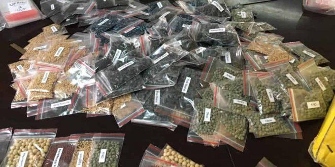 Vegetable Seeds Baguio COVID-19 (1)