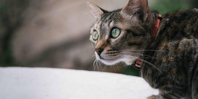 house cat postive for coronavirus
