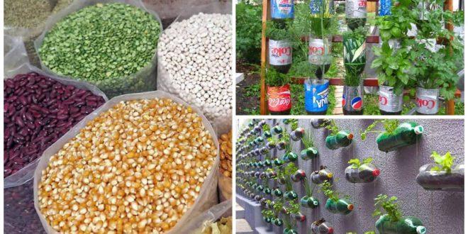 2Mandaue City Free Vegetable Seeds