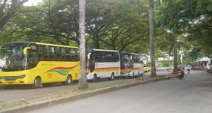 cebu bus