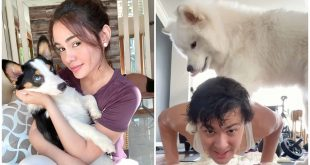 1 pets as heroes amid crisis