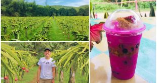 1 Purok Dragon Fruit Farm Liloan Cebu