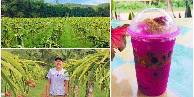 1 Purok Dragon Fruit Farm Liloan Cebu