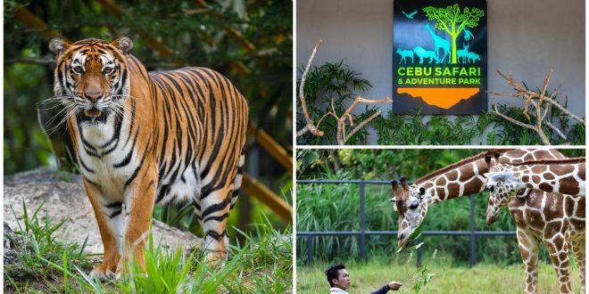 1 cebu safari adventure park reopening