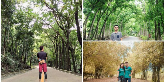 1 manmade forests in cebu