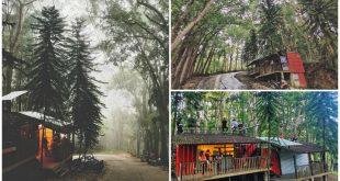 1 Balwarte Ni Vossing Deer Forest Cebu