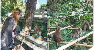 1 Wild Monkey Viewing Oslob Cebu