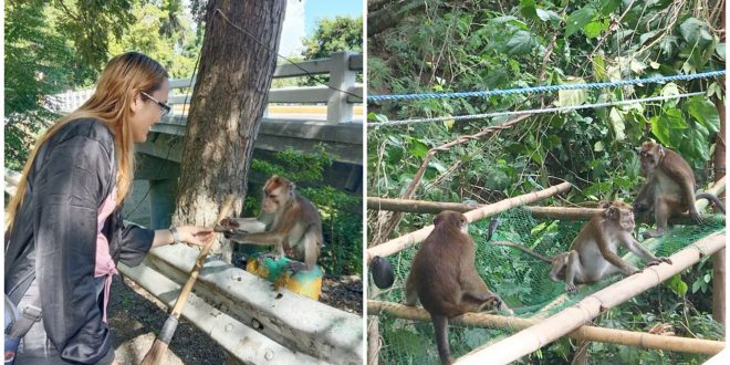 1 Wild Monkey Viewing Oslob Cebu